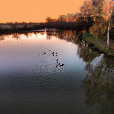 Tombée du jour sur l'étang